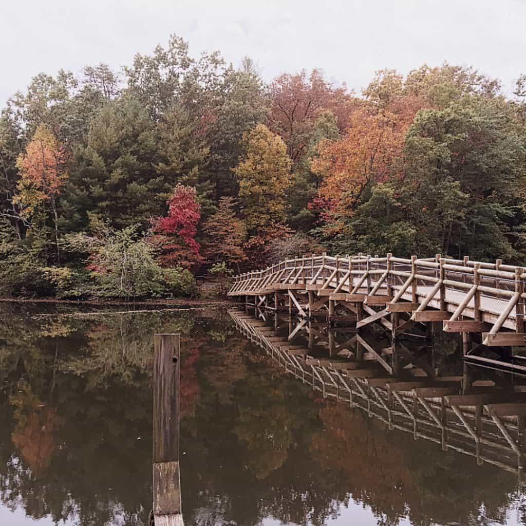Cumberland Mountain State Park